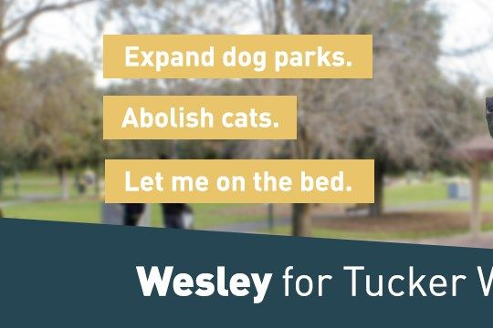 Wesley - Candidate for Tucker Ward - Featured image